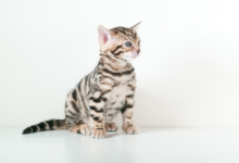 x3 special Kittens available from 22nd November 2014
